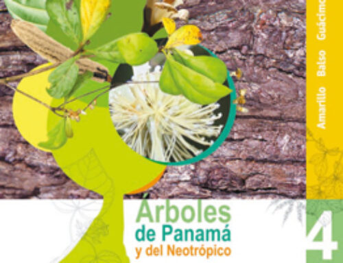 Arboles de Panama y del Neotrópico 4
